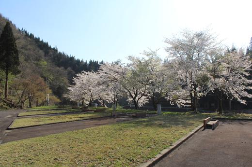 20140427_桜 (2).JPG